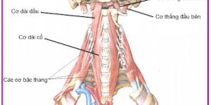 Hội chứng viêm gân cơ dài cổ